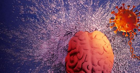 O cérebro na mira